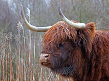Montañés escocés foto de archivo libre de regalías