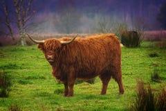 Montañés escocés Imagen de archivo libre de regalías