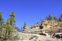 Montaña amarilla rodeada por los árboles de pino verdes imagen de archivo