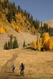 Montaña biking con los árboles de Aspen Imagen de archivo