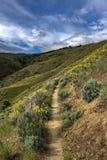 Montaña biking el rastro de la sola pista en las colinas sobre Boise, Idaho Fotografía de archivo