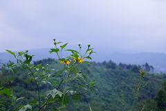 Montaña brumosa Fotos de archivo