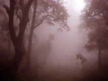Montaña brumosa brumosa la India de Himalaya Imagen de archivo