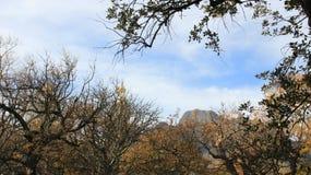 Montaña colorida de Autumn Leaves With Sunlight And fotos de archivo libres de regalías