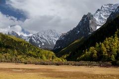 Montaña con el bosque de la nieve y del pino en otoño Imagenes de archivo