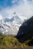 Montaña con el bosque de la nieve y del pino en otoño Foto de archivo libre de regalías