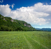 Montaña cubierta por el bosque fotografía de archivo