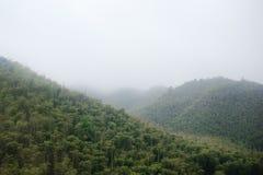 Montaña de bambú Imagen de archivo libre de regalías