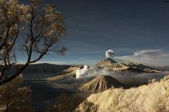 Montaña de Bromo con el árbol de la rama y el foregro de las plantas imágenes de archivo libres de regalías