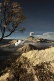 Montaña de Bromo con el árbol de la rama y el foregro de las plantas Imagen de archivo