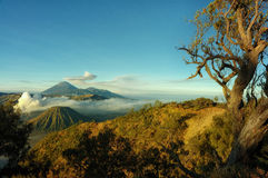 Montaña de Bromo con primero plano del árbol de la rama foto de archivo libre de regalías