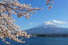Montaña de Fuji con la cubierta de nieve en el top con la flor de cerezo foto de archivo