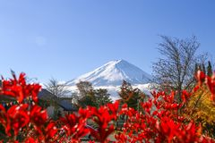Montaña de Fuji con la hoja roja Imagen de archivo