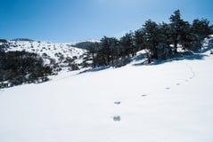 Montaña de Hallasan en la isla Corea de Jeju en invierno Imagenes de archivo