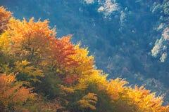 Montaña de Jiajin en el oeste de la provincia de Sichuan en China fotografía de archivo libre de regalías