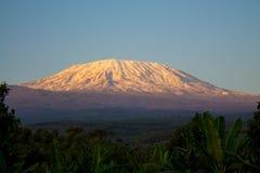 Montaña de Kilimanjaro en la puesta del sol imagen de archivo
