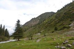 Montaña de Kirguistán Fotos de archivo libres de regalías
