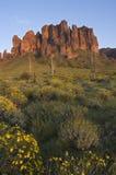 Montaña de la superstición y campo de Brittlebush Imagenes de archivo
