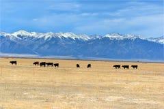 Montaña de la vaca Fotos de archivo