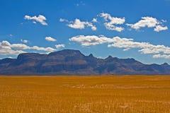 Montaña de Piketberg a través del campo de trigo seco Foto de archivo libre de regalías