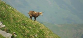 Montaña de Tatra Foto de archivo