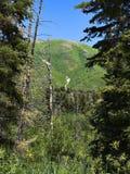 Montaña de Utah - 1 Imagenes de archivo