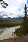 Montaña del bosque Fotos de archivo libres de regalías