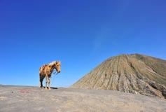 Montaña del caballo Imagenes de archivo