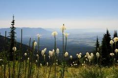 Montaña del pescado blanco Imagenes de archivo