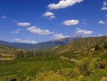 Montaña del viñedo Imágenes de archivo libres de regalías