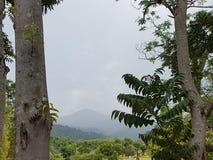 Montaña después del árbol Fotos de archivo
