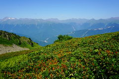 Montaña en flores foto de archivo libre de regalías