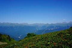 Montaña en flores foto de archivo