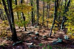 Montaña en la estación del otoño Imagen de archivo