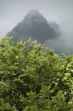 Montaña en selva tropical Fotos de archivo