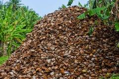 Montaña enorme de las cáscaras del ` s del coco Fotos de archivo