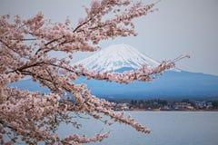 Montaña Fuji en la primavera, flor de cerezo Sakura Imagen de archivo libre de regalías