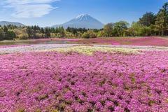 Montaña Fuji y musgo rosado fotos de archivo