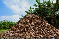 Montaña grande de las cáscaras del ` s del coco Fotografía de archivo