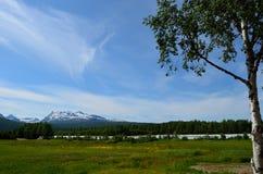 Montaña Nevado con el árbol verde del pasto y de abedul en verano Fotos de archivo