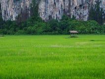 Montaña rural del campo de arroz de la opinión del paisaje Foto de archivo