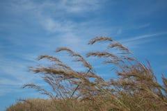 Montaña seca con el fondo del cielo azul Imagenes de archivo