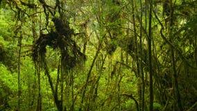 Montaña Tailandia de la selva tropical usual de los matorrales alta almacen de video