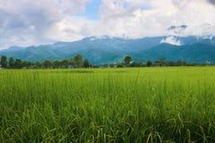 Montaña verde hermosa Imágenes de archivo libres de regalías