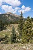 Montaña verde 12.791 pies situados en el bosque del Estado del río Blanco Fotos de archivo