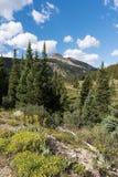 Montaña verde 12.791 pies situados en el bosque del Estado del río Blanco Imágenes de archivo libres de regalías