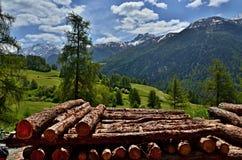 Montaña-vista suiza de la trayectoria al bos-cha Imágenes de archivo libres de regalías