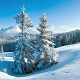 Montaña y abetos del invierno Foto de archivo