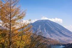 Montaña y alerce Imagen de archivo libre de regalías