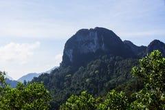 Montaña y bosque hermosos Imágenes de archivo libres de regalías